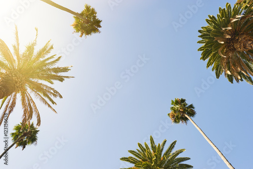 Foto op Aluminium Palm boom Palm Trees looking up to the sky