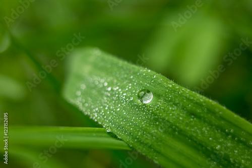 Photo sur Aluminium Nature waterdruppel op een grassprietje