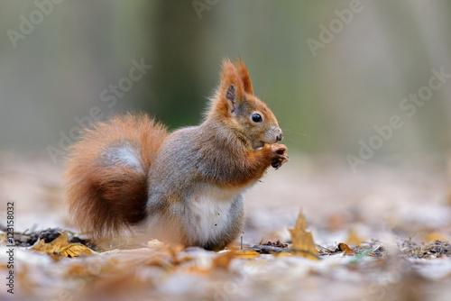 Fotobehang Eekhoorn Squirrel nutty picnic