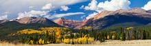 Panoramic Fall Forest Of Aspen...