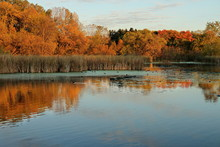 Autumn Colors And Coots On Medicine Lake In Plymouth, Minnesota