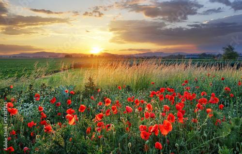 In de dag Poppy Vivid poppy field