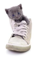 Kitten In Boot.