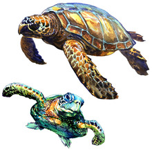 Sea Green Turtle Isolated, Set...