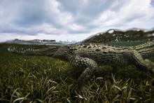 Underwater View Of Crocodile