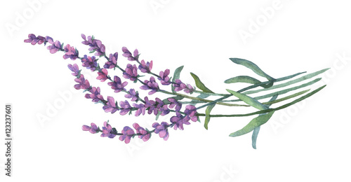 Photo  Lavender flowers. Watercolor illustration on white background.