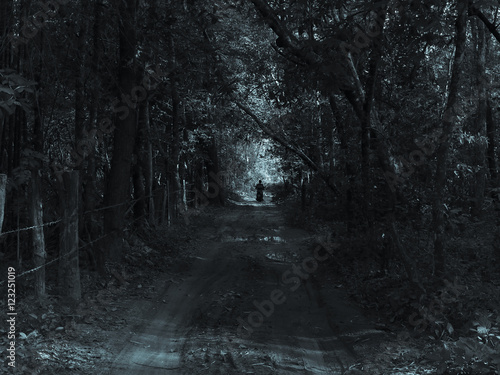 Fototapeten Wald Trail through a mysterious dark old forest in fog. Autumn morning in Crimea. Magical atmosphere. Fairytale