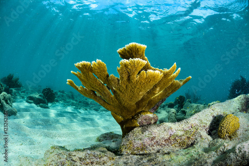 Elkhorn Coral and sunlight