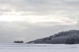 Biała zima kraina cudów z lodowym śniegiem w zimnej przyrodzie. Słońce całuje tę wspaniałą zimową scenerię w pięknym śnieżnym i lodowatym krajobrazie. Pochmurne niebo słoneczne i pokryte śniegiem łąki - 123268452