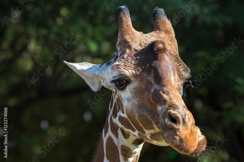 Fotografie, Obraz  Zoo Animals