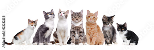 A group of cats sitting in a raw on white background Poster