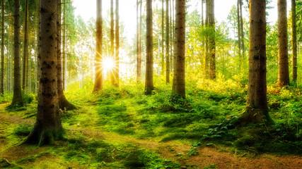 Fototapeta Idyllischer Sonnenaufgang im herbstlichen Wald