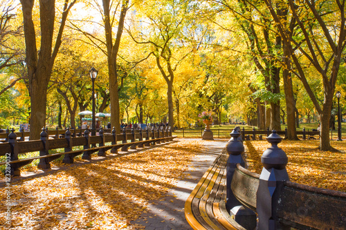 Fototapeta Central Park in New York City on colorful autumn day