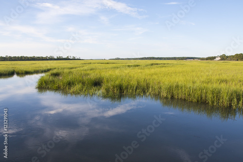 Fotografia South Carolina salt marshlands