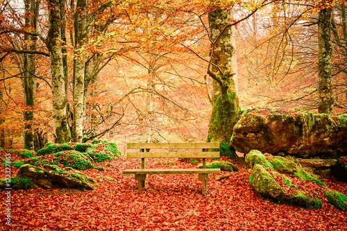 In de dag Oranje eclat lonely bench at autumn landscape