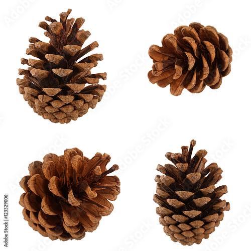 Fotografie, Obraz  Set of cones of coniferous trees