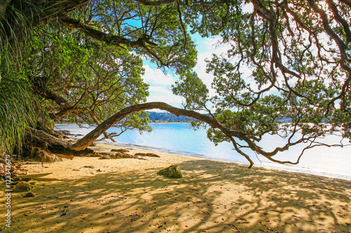 Hahei Beach in Coromandel peninsula, New Zealand Canvas Print