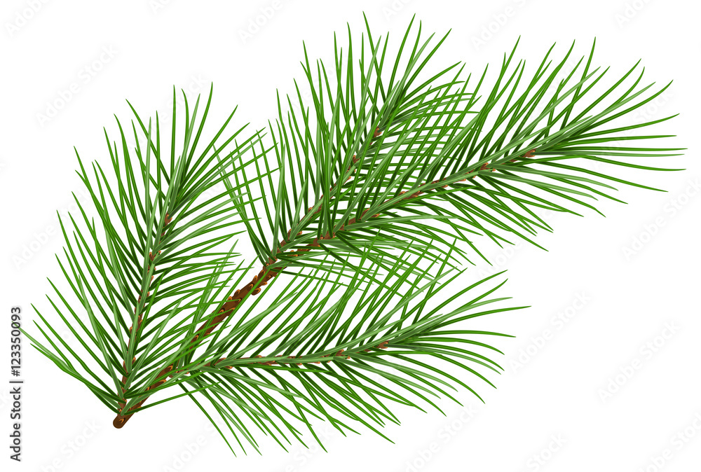 Fototapety, obrazy: Green fluffy pine branch symbol of new year. Isolated on white background