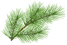 Green Fluffy Pine Branch Symbol Of New Year. Isolated On White Background