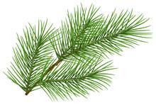 Green Fluffy Pine Branch Symbo...