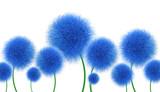 Fototapeta Kwiaty - Niebieskie kwiaty na białym tle