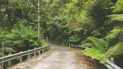 Straße durch den Regenwald in Victoria - Australien