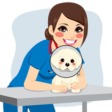 Cute Little Dog With Cone Coll...
