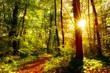 canvas print picture - Wald im Herbst bei Sonnenschein