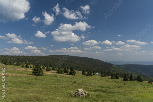 Photo Stands Roe Krkonose mountains in sunny summer day