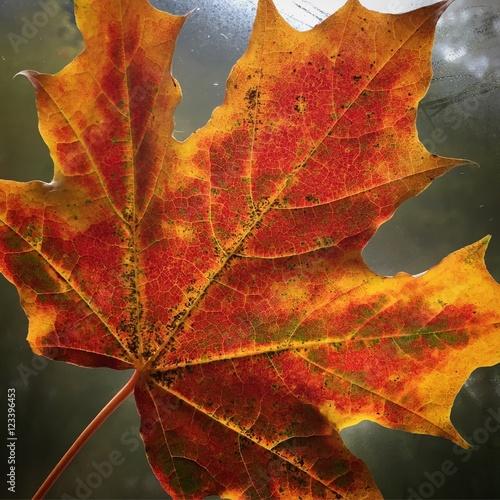 Fotografija  foglia foglie foglia autunnale colori autunno