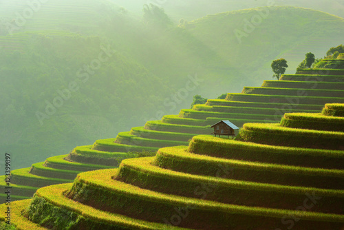 Tuinposter Rijstvelden Terraced rice field and wooden hut, Mu Cang Chai, Vietnam