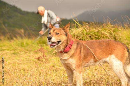 Foto  飼い犬(雑種)