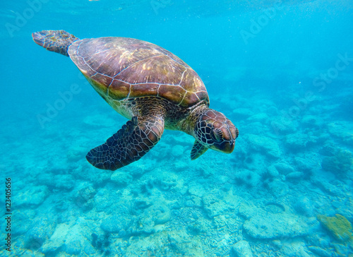 Tuinposter Schildpad Underwater photo with sea turtle and text place