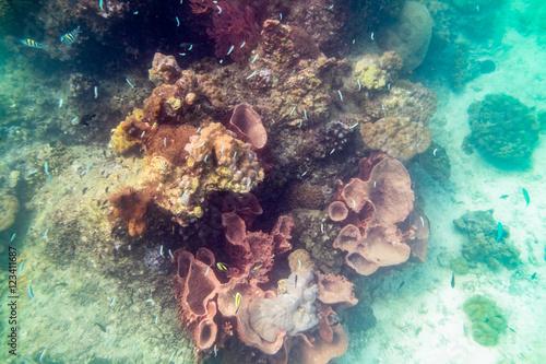 Życie podwodne kolorowe ryby rafy koralowej wokół, andaman,