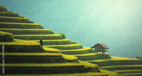 Fotografie, Obraz  Rice fields on terraced of Mu Cang Chai, YenBai, Vietnam