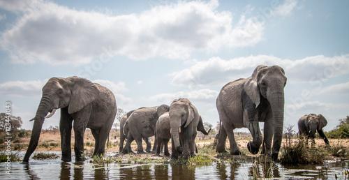 Foto op Plexiglas Afrika Drinking herd of Elephants.