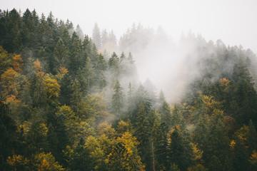FototapetaFog over fir trees in mountains