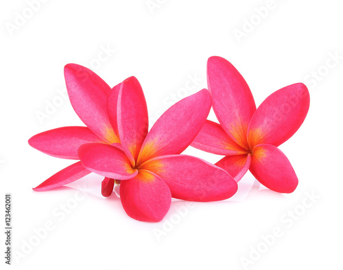 Tuinposter Frangipani Plumeria flowers isolated on white background