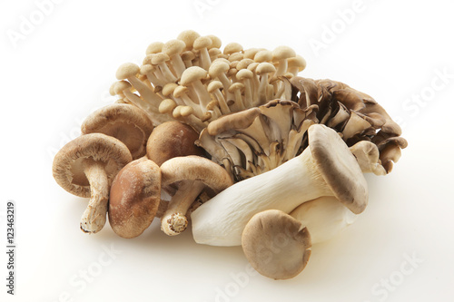 Fotografie, Obraz  きのこの集合 Japan mushrooms set