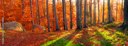 Spoed Foto op Canvas Rood traf. Beeches the rocks