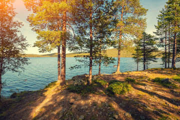 Fototapeta Drzewa Sea shore in sunny day. Pine trees near sea. Seaside in autumn. Finland. Europe
