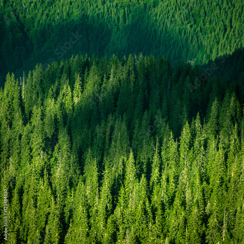 Wall Murals Forest Beautiful pine trees