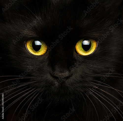 Keuken foto achterwand Kat Cute muzzle of a black cat close up