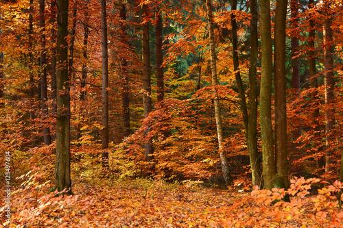 Stickers pour porte Orange eclat Autumn forest