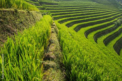 Photo sur Toile Les champs de riz Beautiful landscape rice fields on terraced of Mu Cang Chai