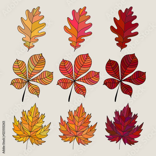 Set Of Colorful Autumn Leaves Vector Illustration Oak Maple And Chestnut Tree S Leaf Icon Fall Leaves Color Gradient 3 Kind Different Colored Leaves Buy This Stock Vector And Explore Similar Vectors