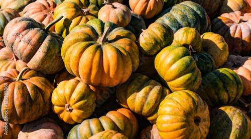 pile of winter squash Canvas Print