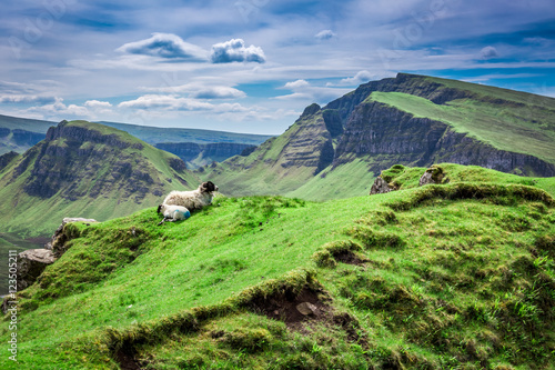 Fotografija  View to sheeps in Quiraing, Scotland, United Kingdom