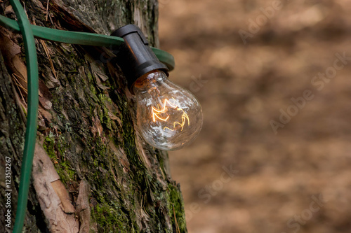 Photo Stands Nature lamp