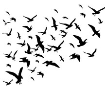 Flying Birds Flock Vector Illustration Isolated On White Background